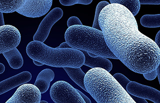 bacteria-macro-featured-image1