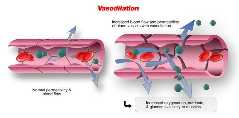 vasodilation sexual health